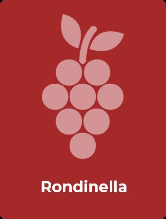 Rondinella druif
